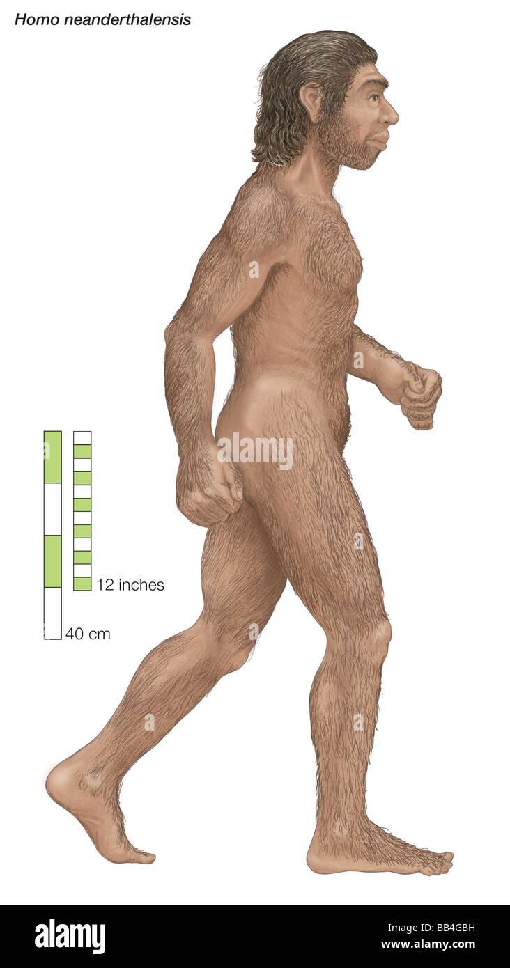 Homo neanderthalensis, who ranged from western Europe to Central Asia for 100,000 years before dying out about 30,000 - Stock Image
