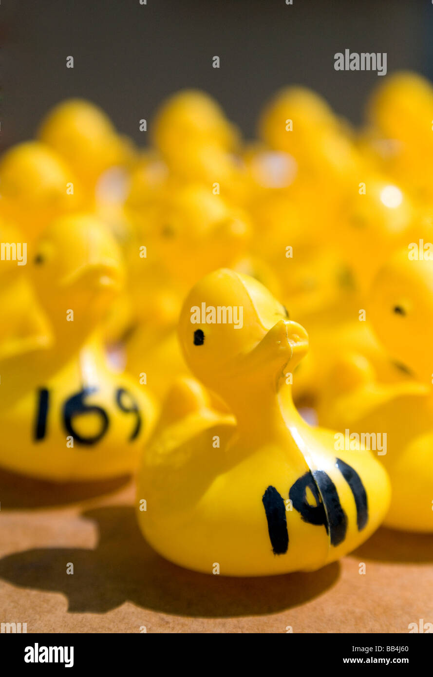 Plastic duck participants in a Charity  duck race at Wallingford, Oxfordshire, UK - Stock Image