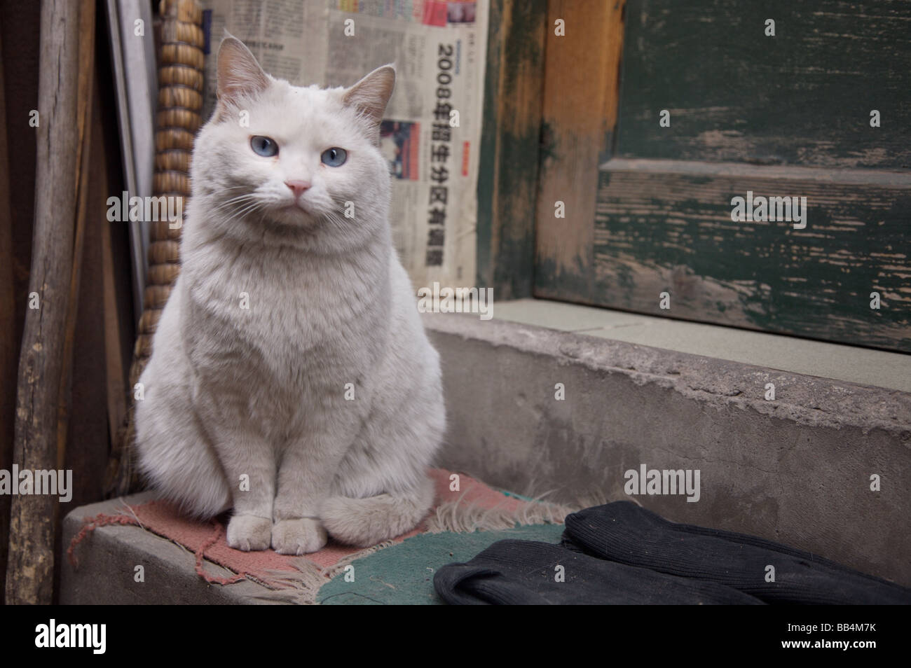 Cat sitting on doorstep in Hutong - Stock Image
