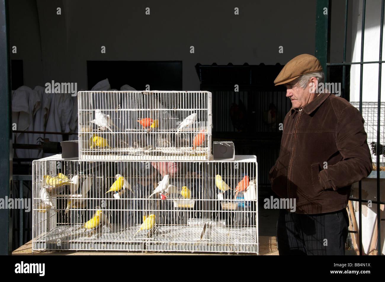 Canaries for sale Wednesday market Sineu Mallorca Balearic Islands Spain - Stock Image