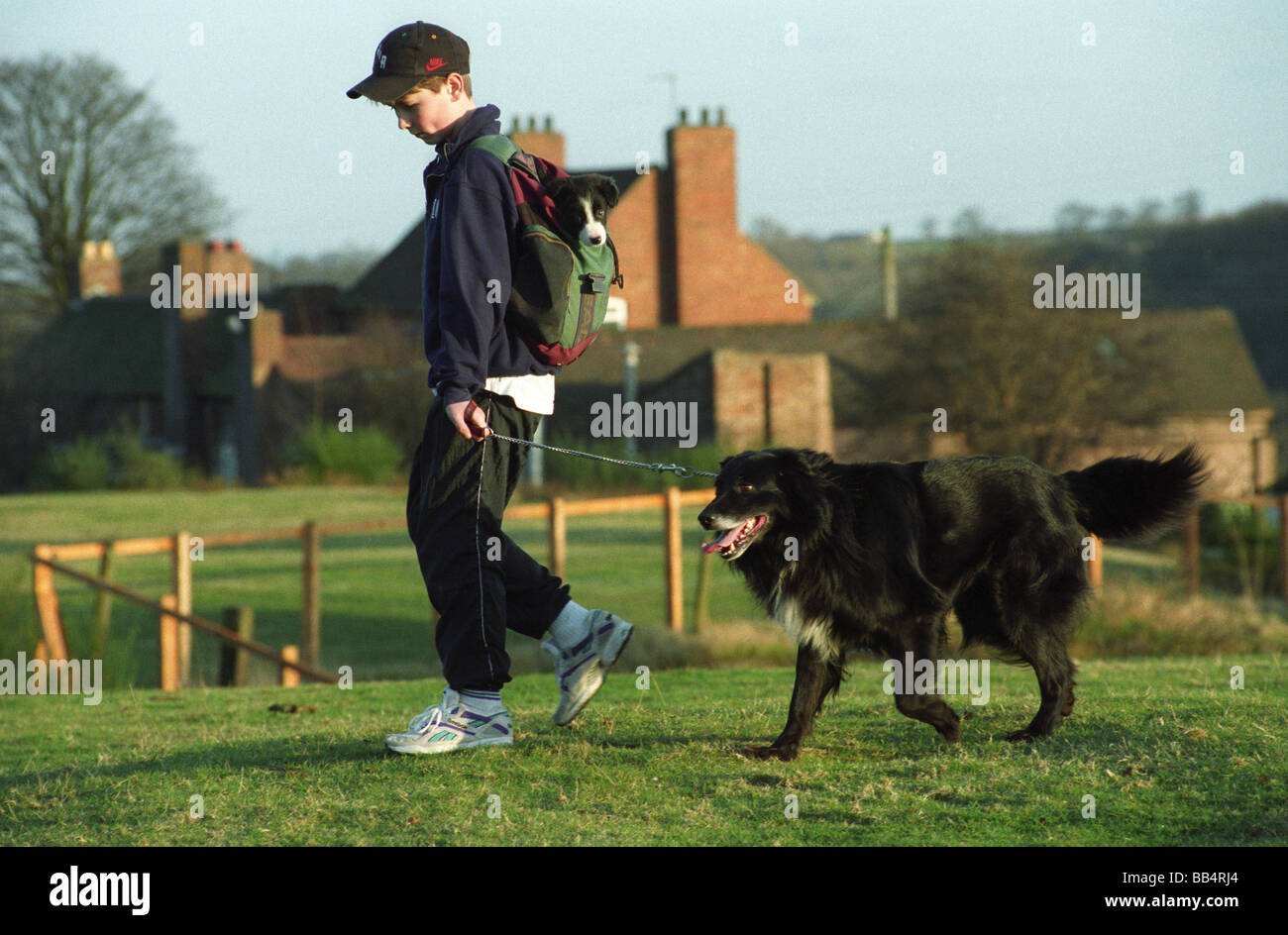 Border Collie puppy carried in a ruck sack by young boy uk - Stock Image