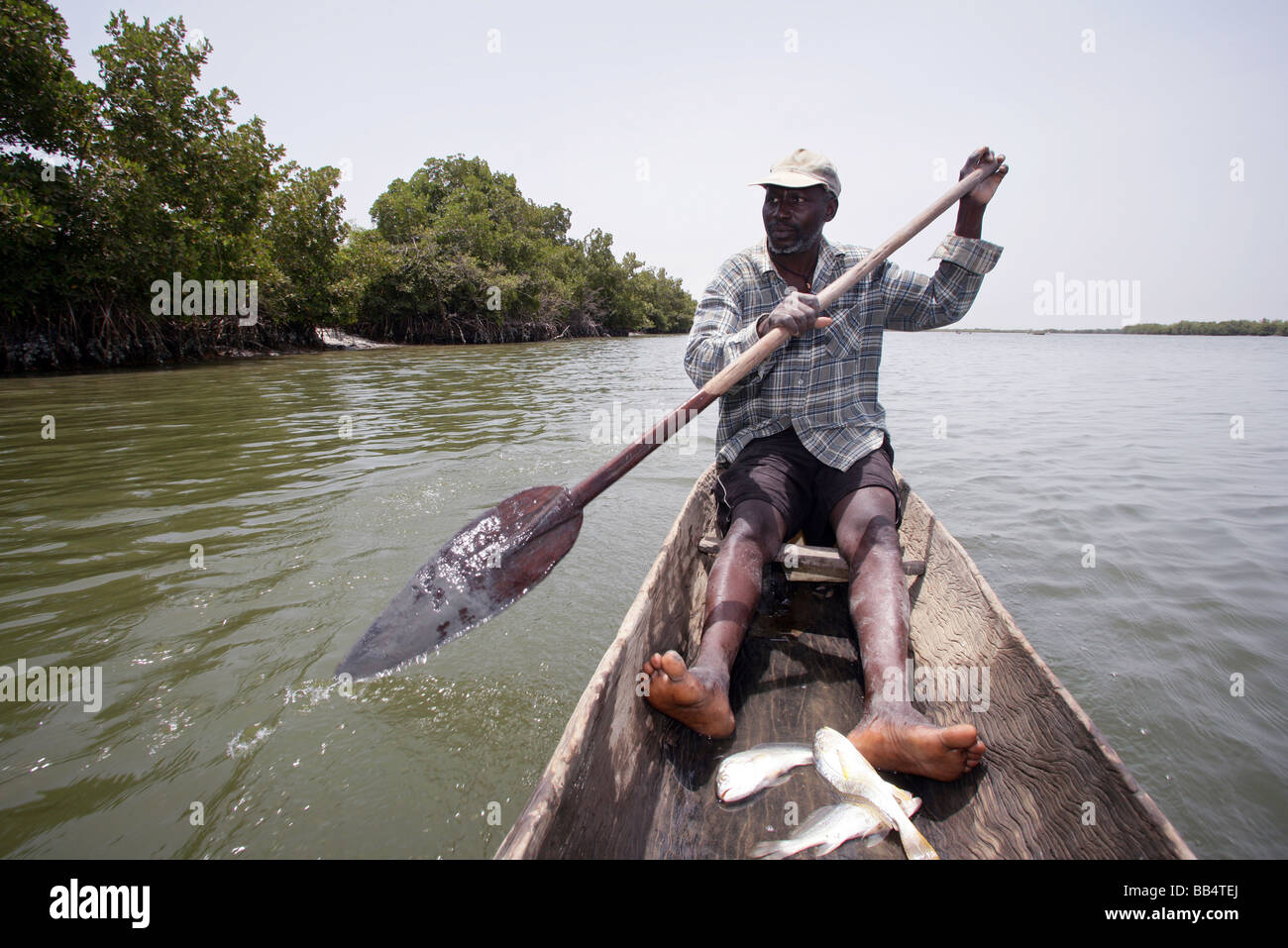 Senegal: Fisherman in his dugout canoe on the river Casamance - Stock Image