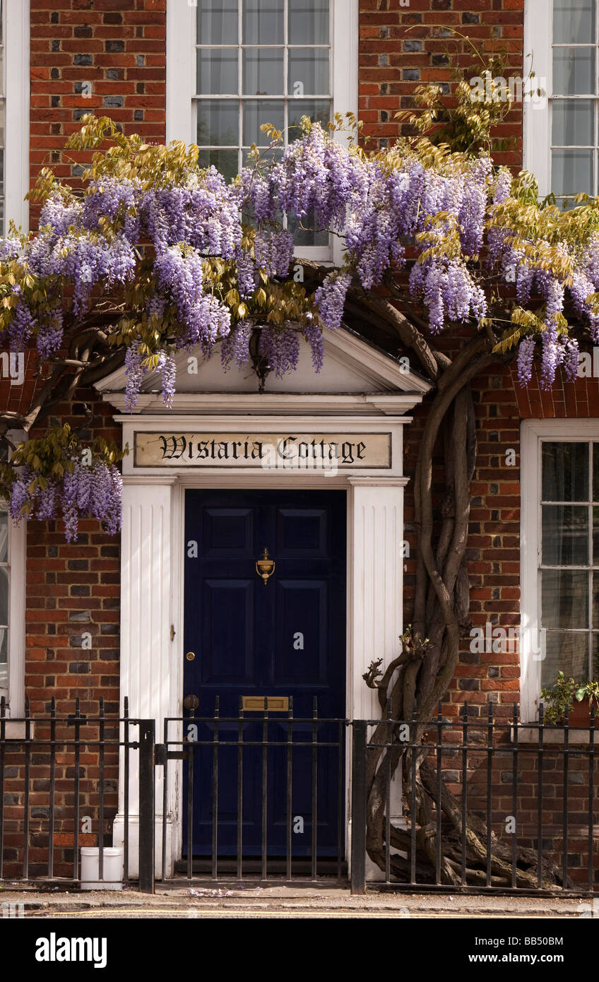 England Berkshire Cookham Sutton Road Wistaria Cottage Wisteria hung front of John Lewis Partnership building - Stock Image