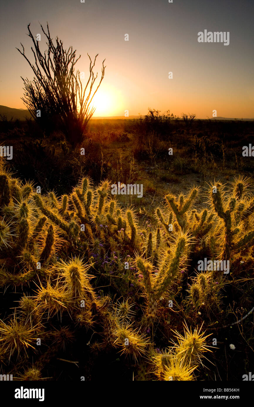 Sunrise in Anza Borrego Desert State Park, California. - Stock Image
