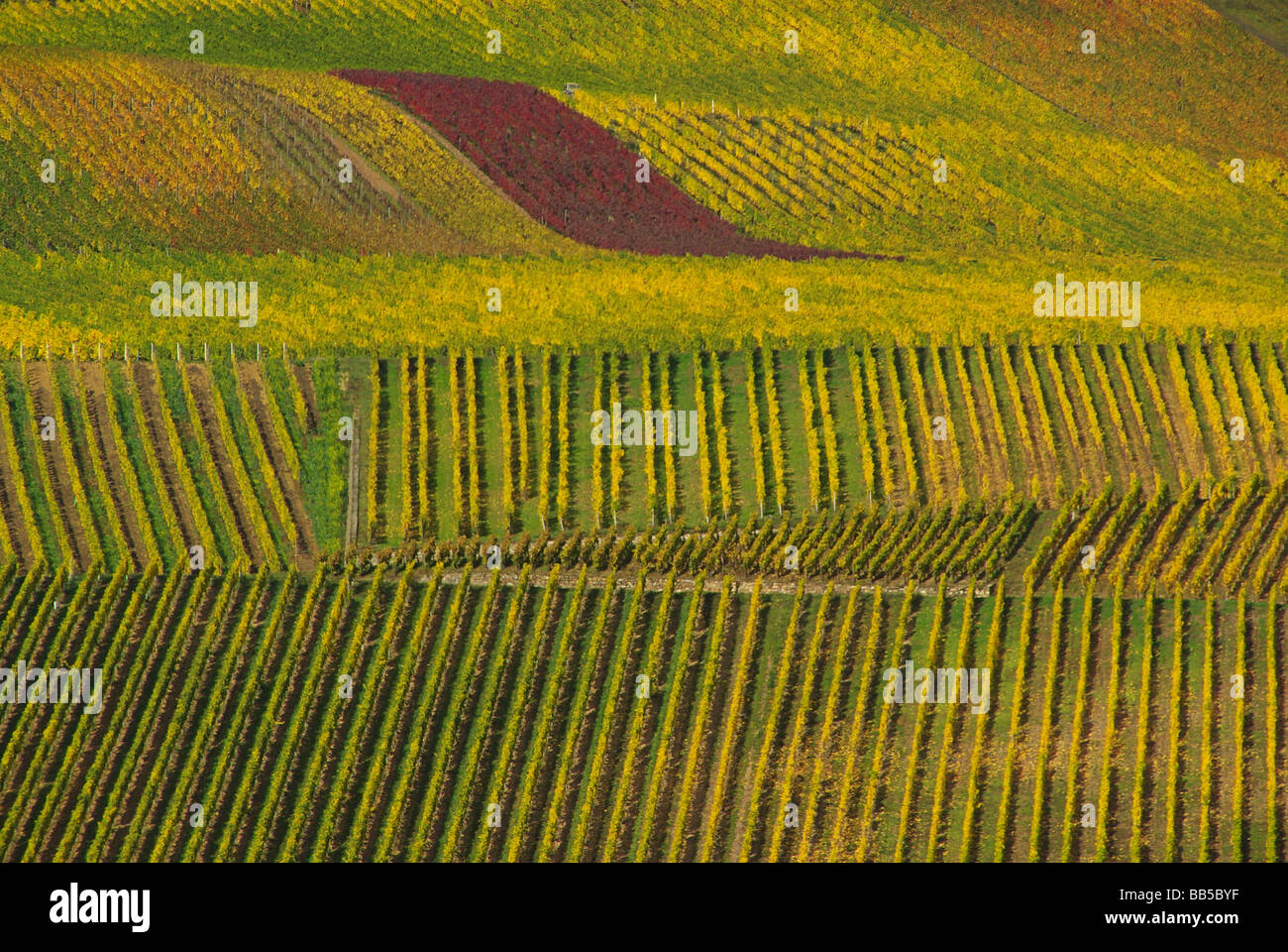 Weinberg vineyard 22 Stock Photo
