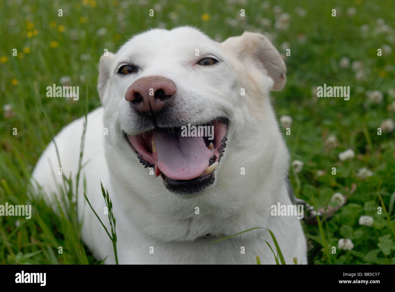 Happy dog - Stock Image