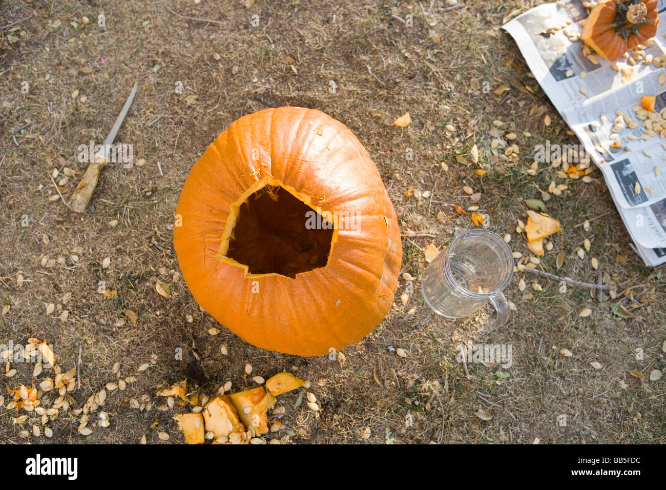 pumpkin with top removed, first step to creating a Jackolantern - Stock Image