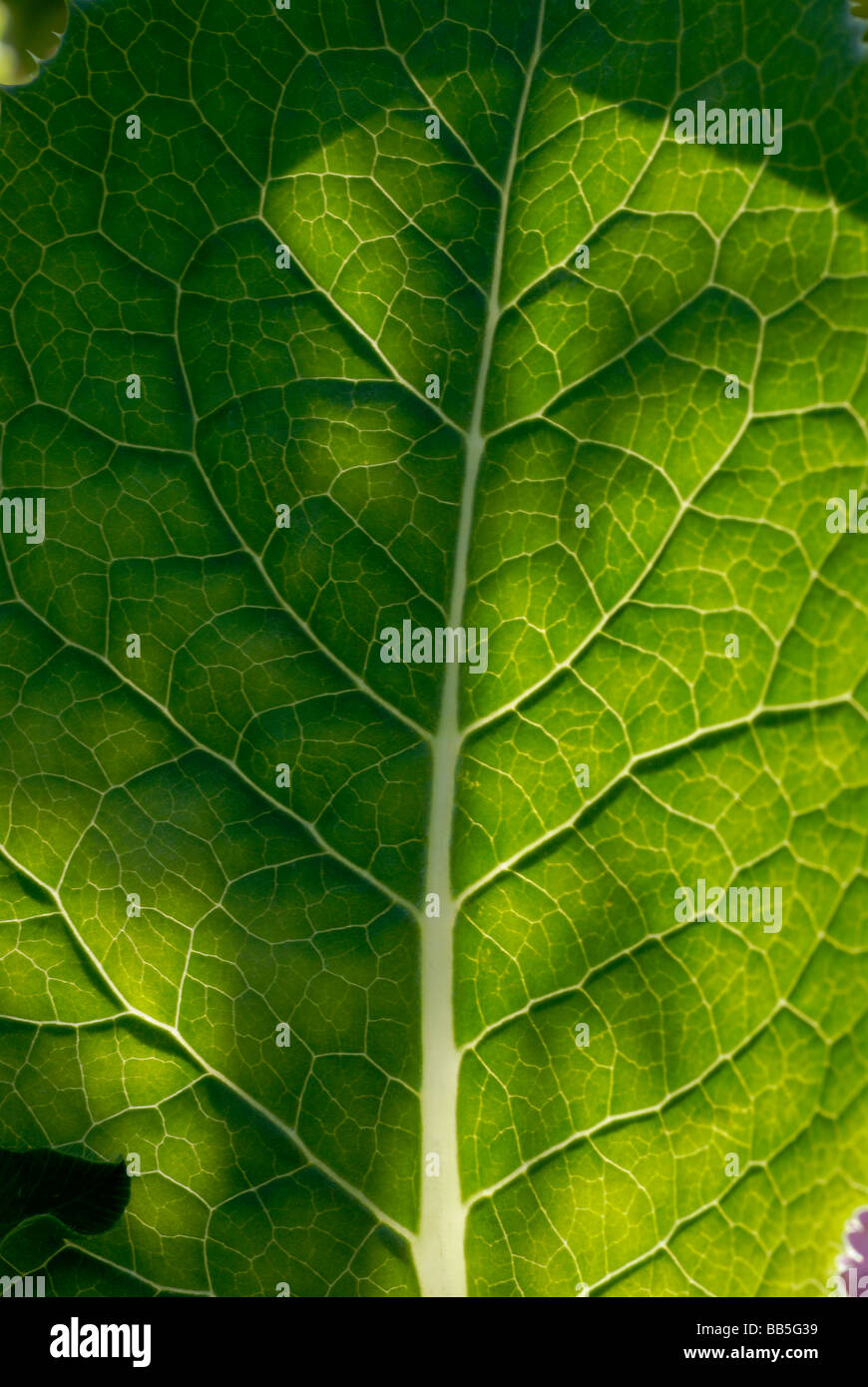 Selective focus leaf detail Stock Photo