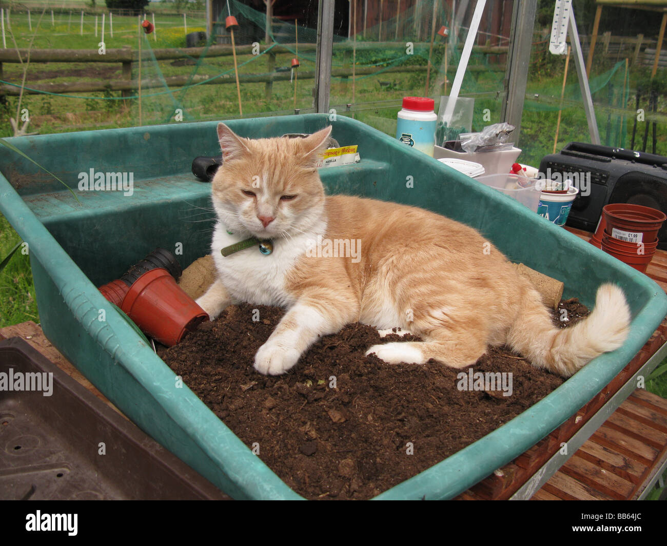 cat in compost - Stock Image