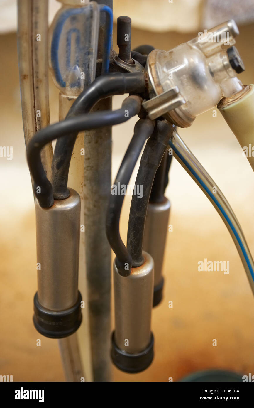 Milking Parlour At Dairy Farm - Stock Image
