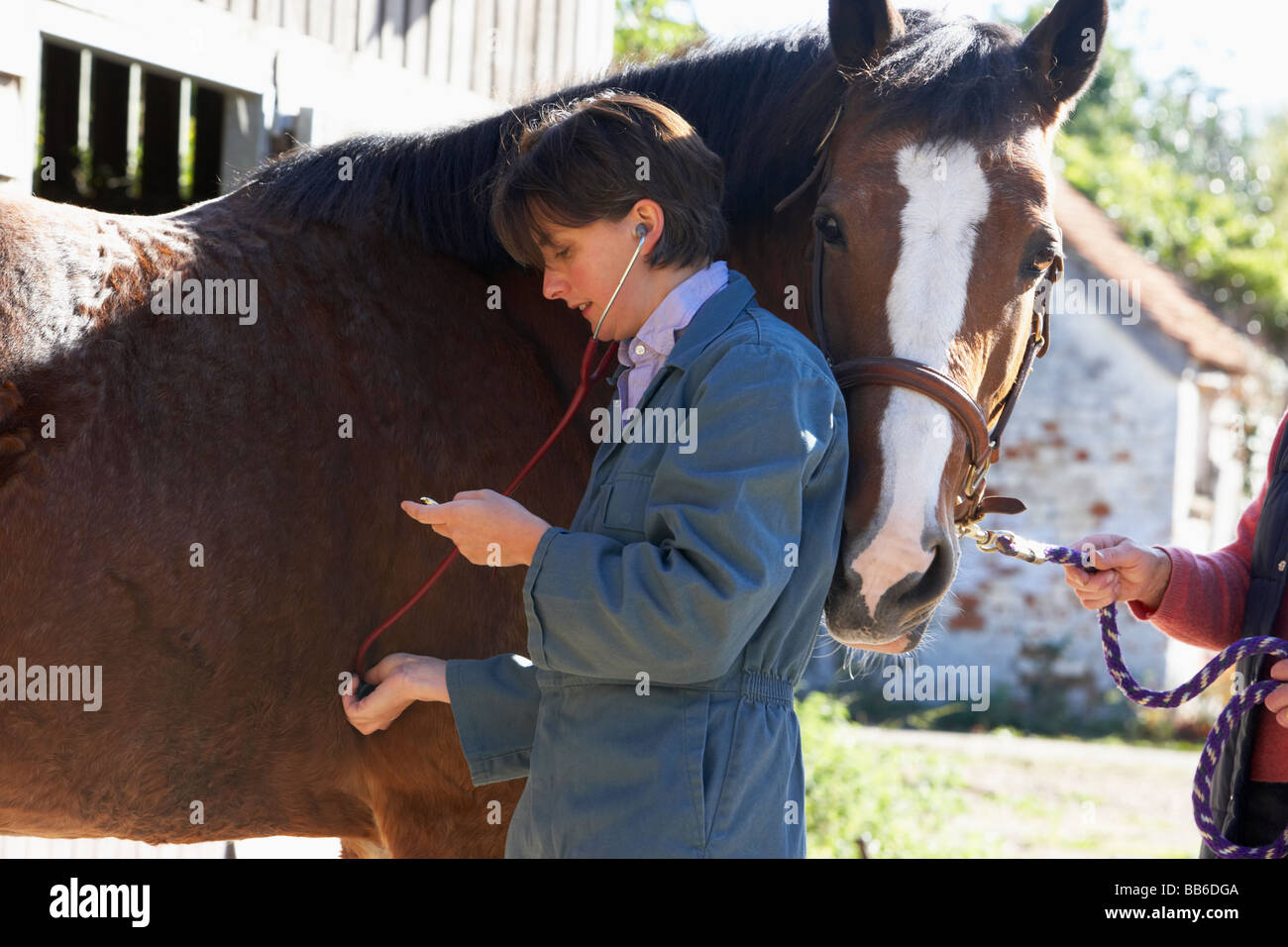 Vet Examining Horse With Stethescope - Stock Image