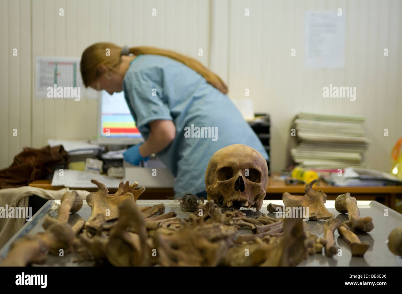 Anthropologist examining a human skull at the mortuary facility of ICMP commission of missing persons in town of Stock Photo
