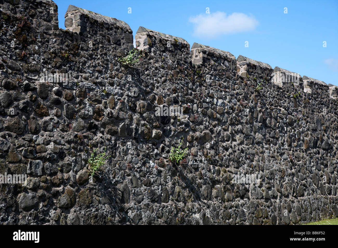 remaining section of the old medieval town walls of Carrickfergus county antrim northern ireland uk - Stock Image