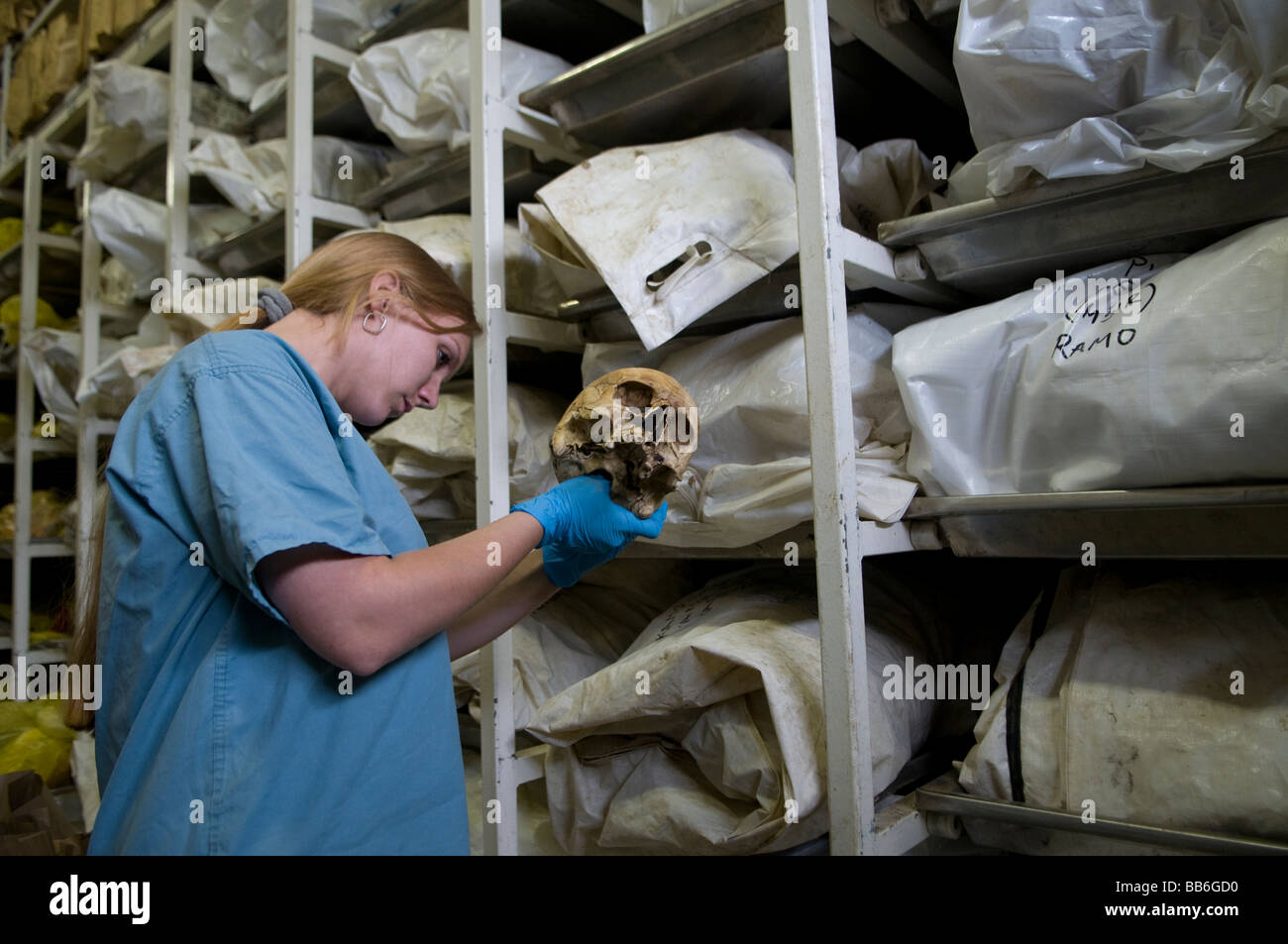 Forensic archaeologist examining a human skull at the mortuary facility of ICMP commission of missing persons in - Stock Image