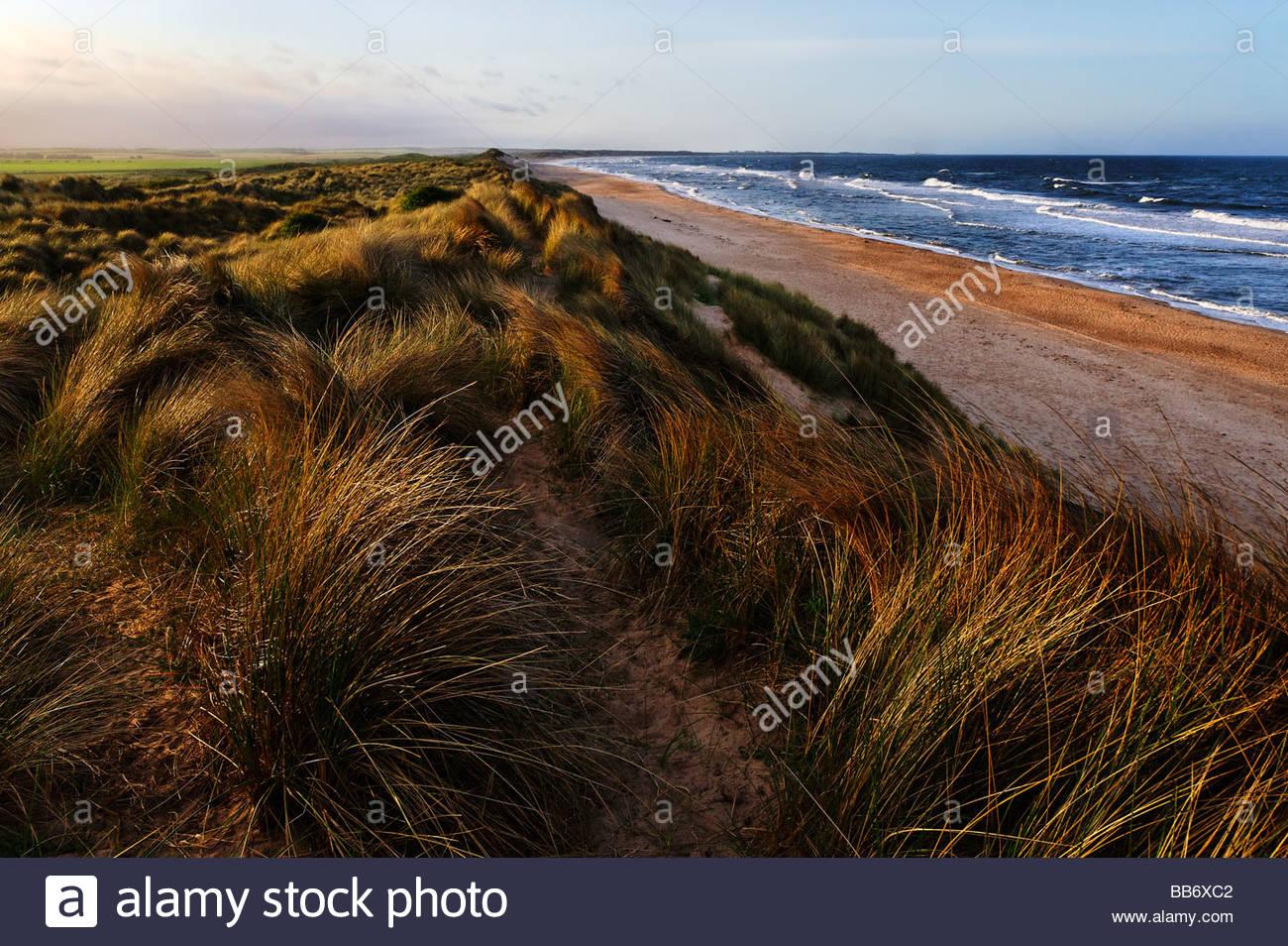 Dunes and beach - Stock Image