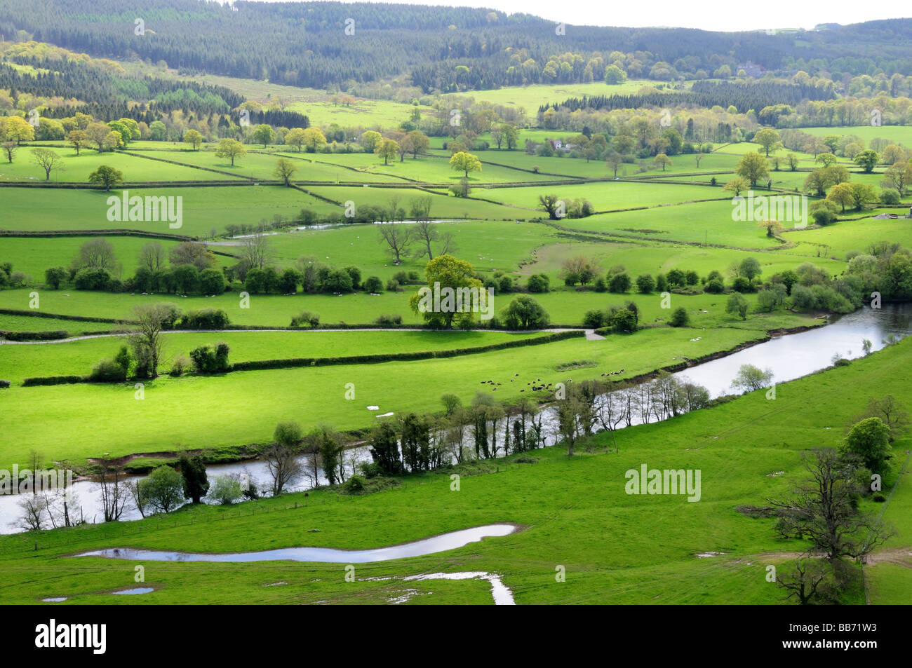River Towy and Tywi Valley in Spring llandeilo Carmarthenshire Wales - Stock Image