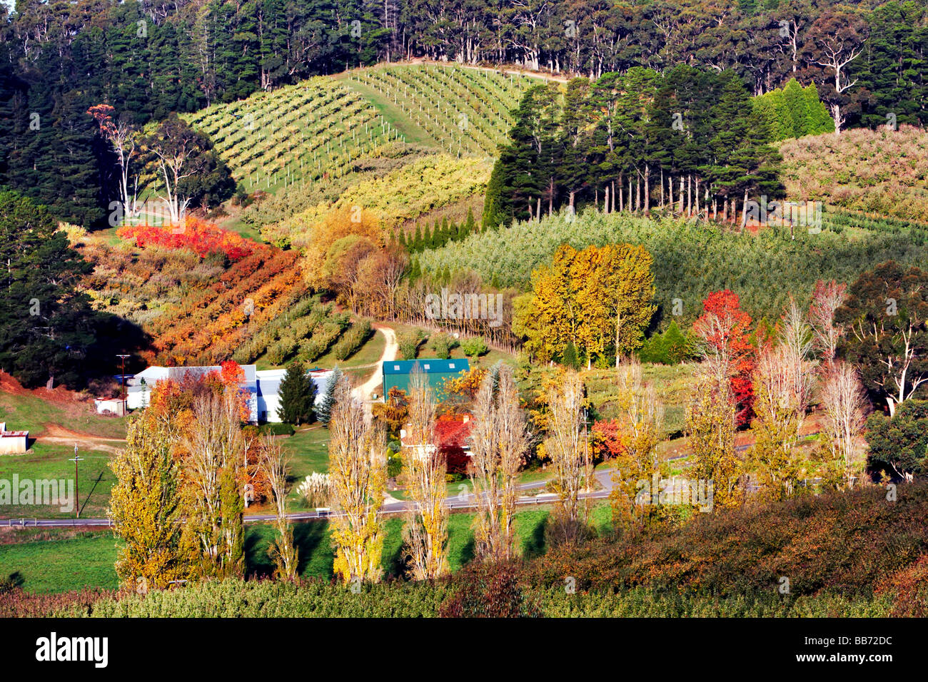 Vineyards at Forest Range in the Mount Lofty Ranges South Australia Stock Photo