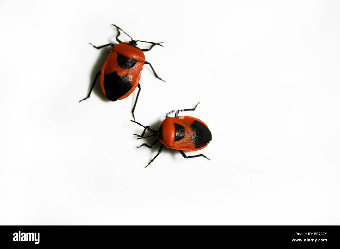 Fire bugs in white background - Stock Image
