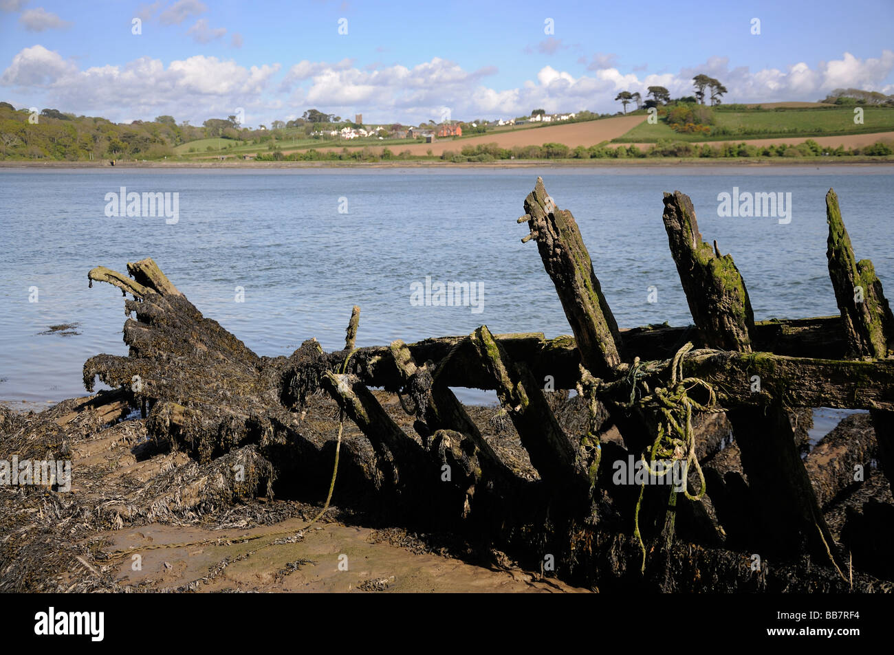 Decaying hull timbers on the banks of the river Torridge - Stock Image