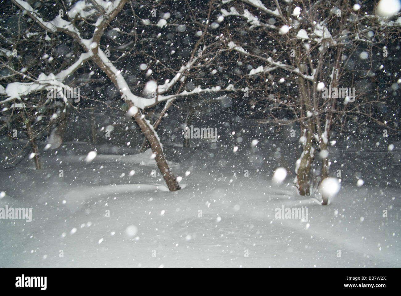 winter time - Stock Image