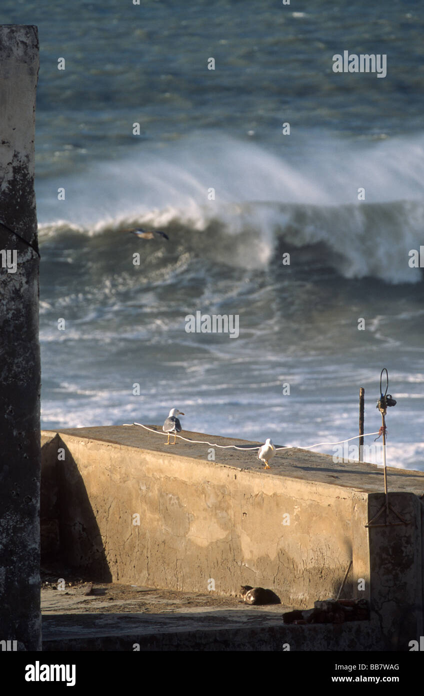Seagulls and cat on roof terrace with ocean view and breakers with spume, medina of Essaouira, Morocco - Stock Image