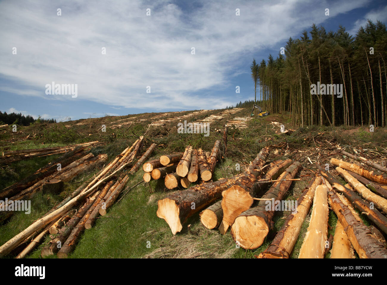 harvesting timber from softwood conifer site in north county antrim northern ireland - Stock Image