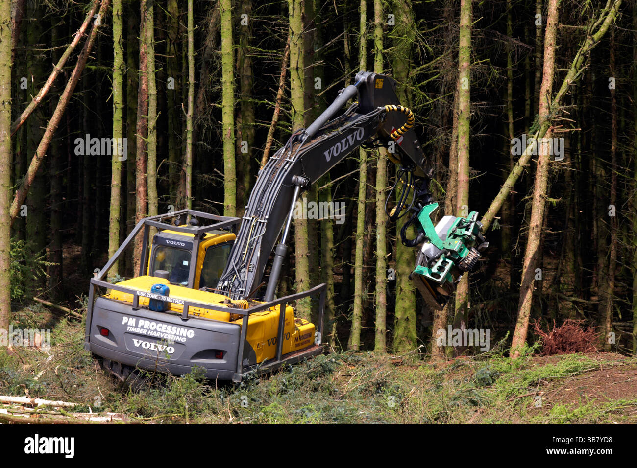 mechanical digger cutter loader backhoe harvesting timber from softwood conifer site in north county antrim northern - Stock Image