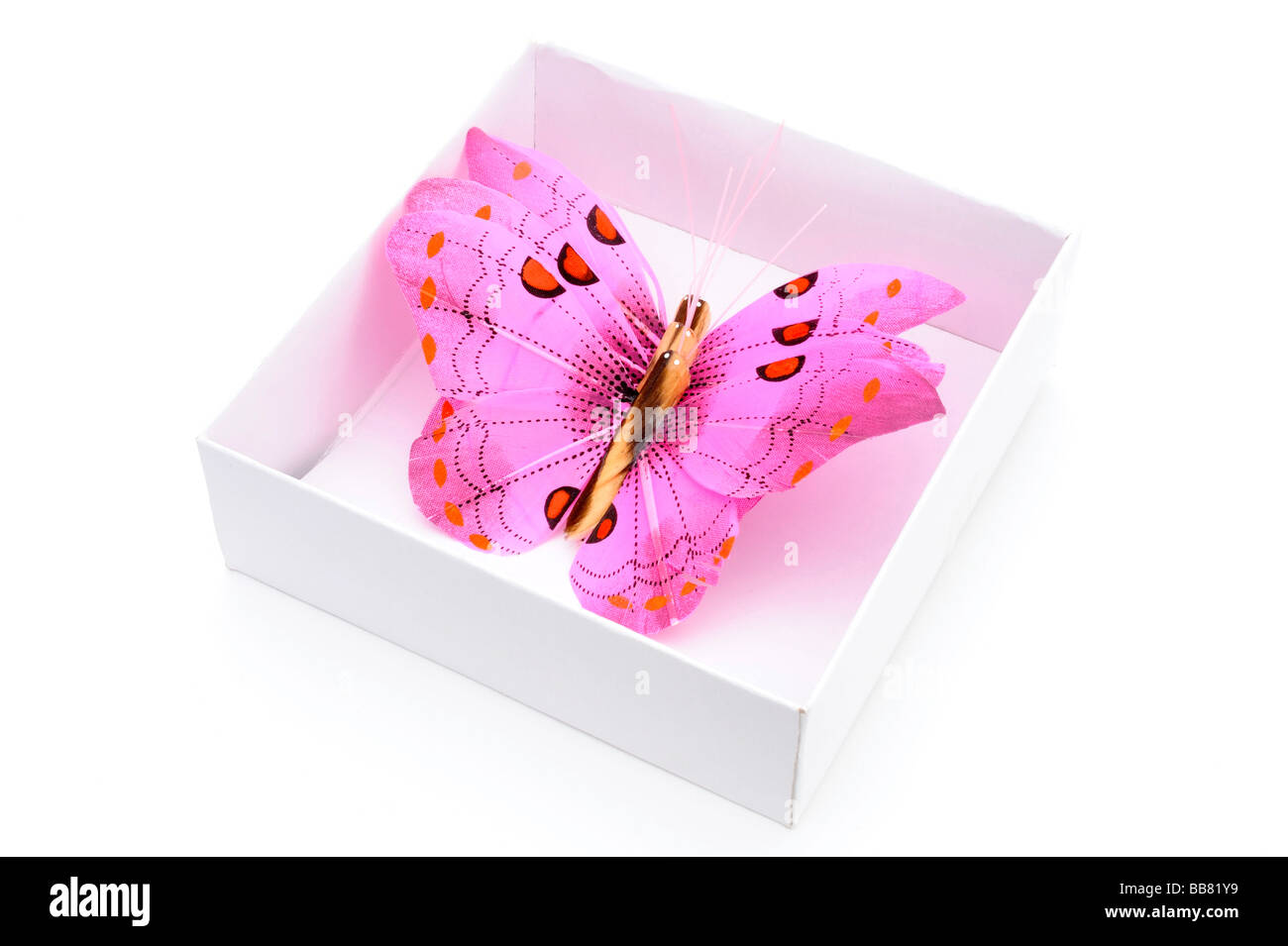Butterfly, decoration - Stock Image