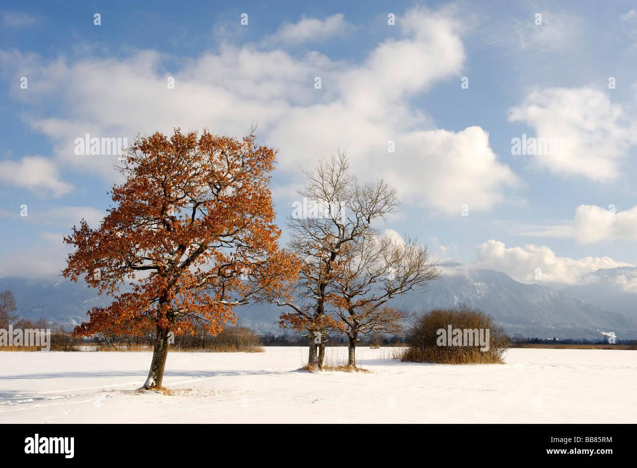 Murnauer Moos, Murnau marsh, Upper Bavaria, Germany, Europe - Stock Image