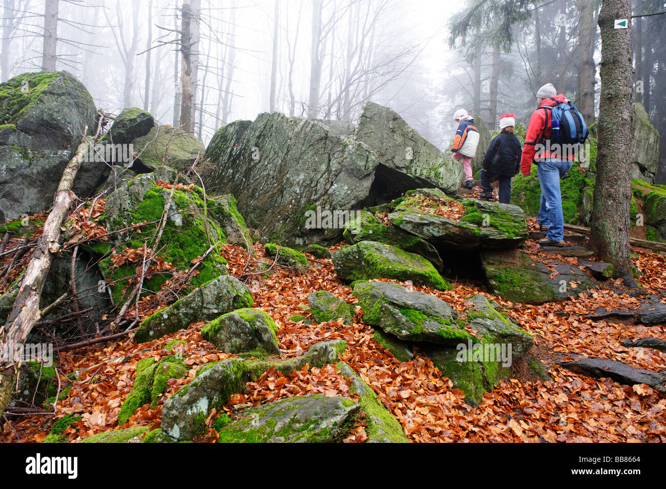 On the track from Waldhaeuser to the Lusen mountain, Bavarian Forest National Park, Lower Bavaria, Germany, Europe - Stock Image