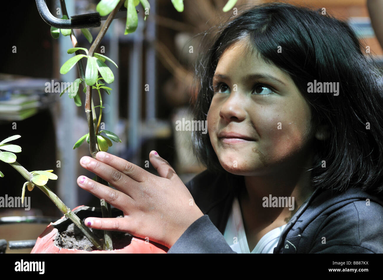 Girl, 9 years old, affectionately nursing a seedling, slums of Cerro Norte, Bogotá, Columbia - Stock Image