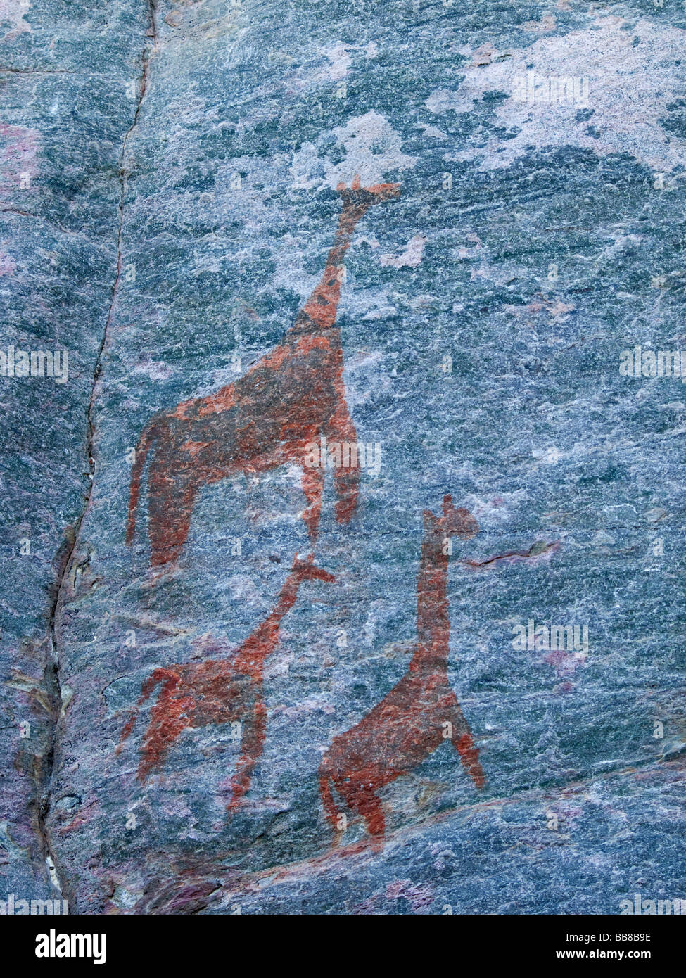 Rock paintings of Giraffes on the Rhino-Trail of the UNESCO World Heritage Site, Tsodilo Hills, Botswana, Africa - Stock Image