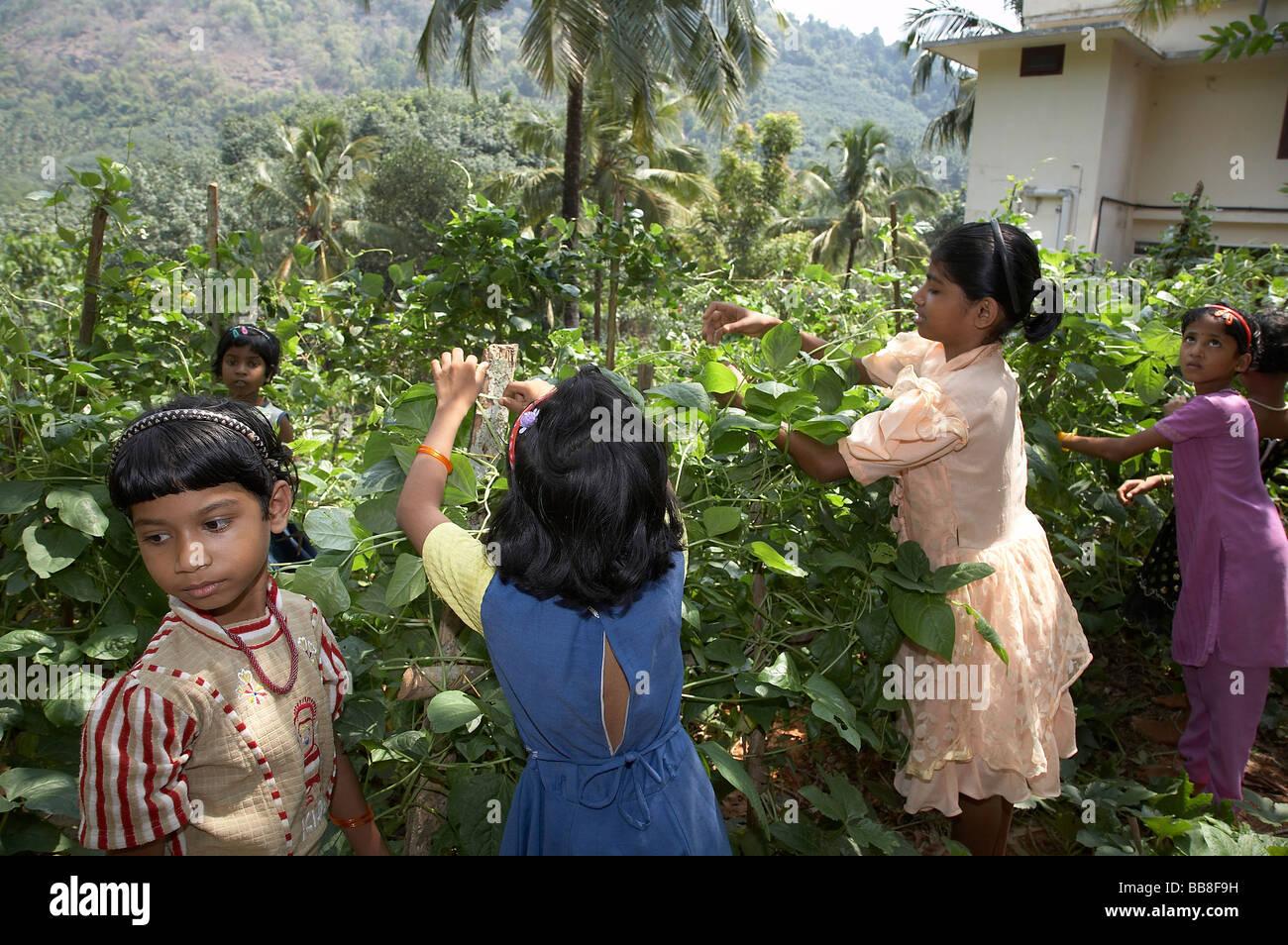 Painet jq3520 india girls woking in vegatble plot mary matha bala