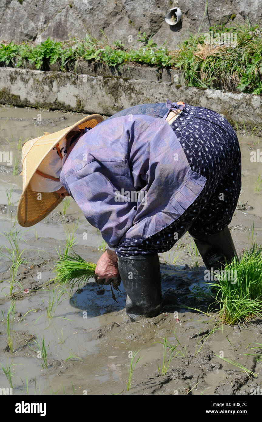 Female rice farmer wearing rice straw hat planting rice shoots by hand, Ohara, Japan, Asia - Stock Image