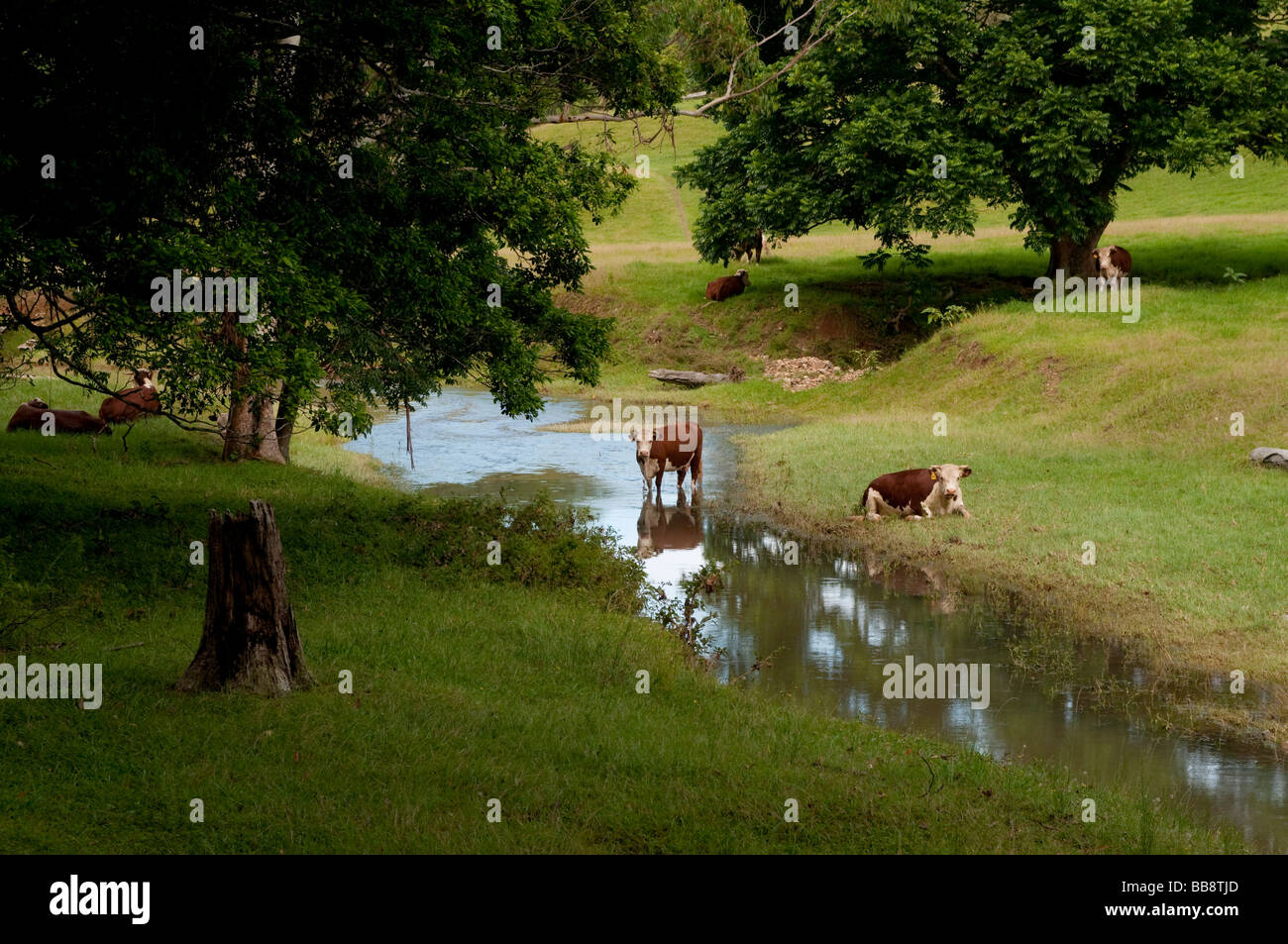 Pastoral scene in the Inland countryside of Coffs Harbour region NSW Australia - Stock Image