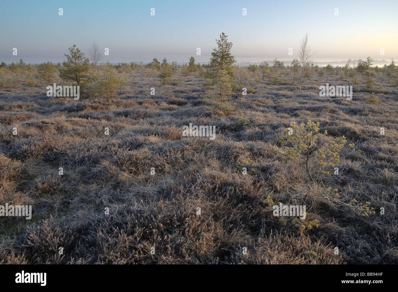 raised bog at dawn Stock Photo