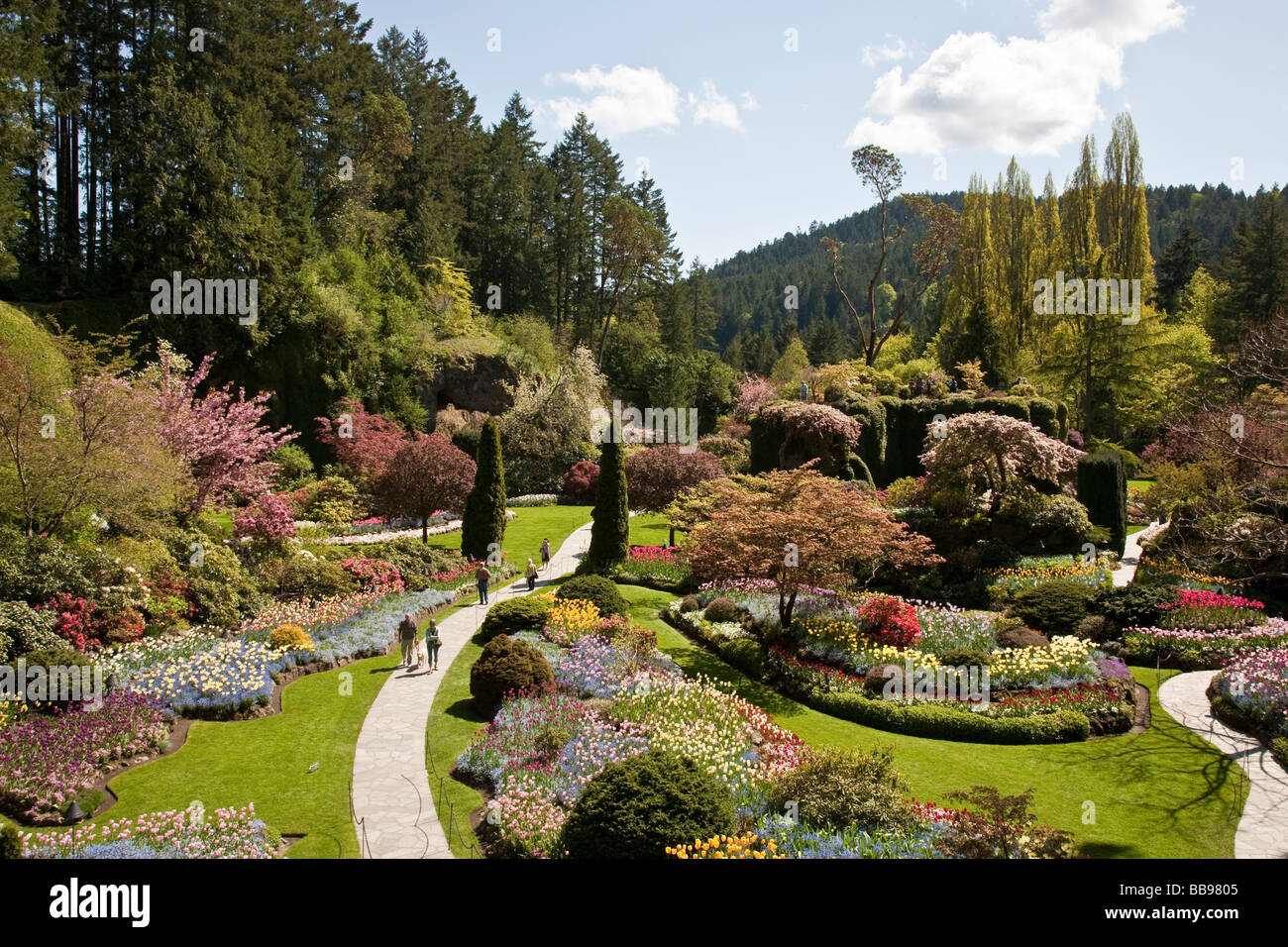 Panoramic view of Sunken Garden Sunny Spring day in Butchart Gardens ...
