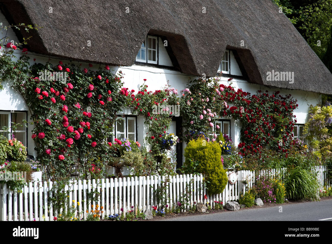 Old fashioned Rose Cottage. Thatched cottage with climbing red roses in Wherwell, Hampshire, England Stock Photo