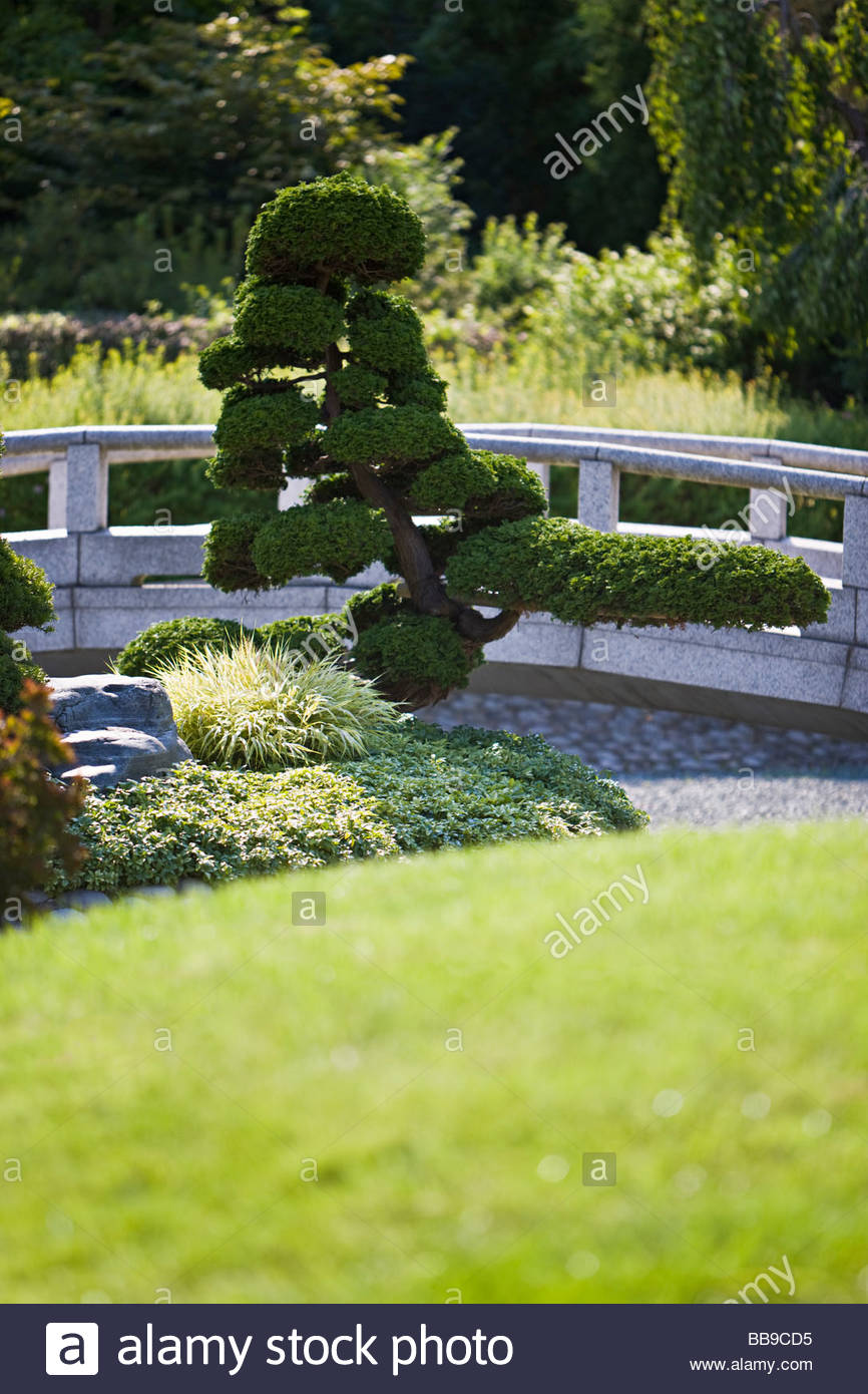 Japanese Dry Garden Stone Bridge Evergreen Trees Pruning Shaping Artificial Landscape Gardening Culture Duesseldorf Europe