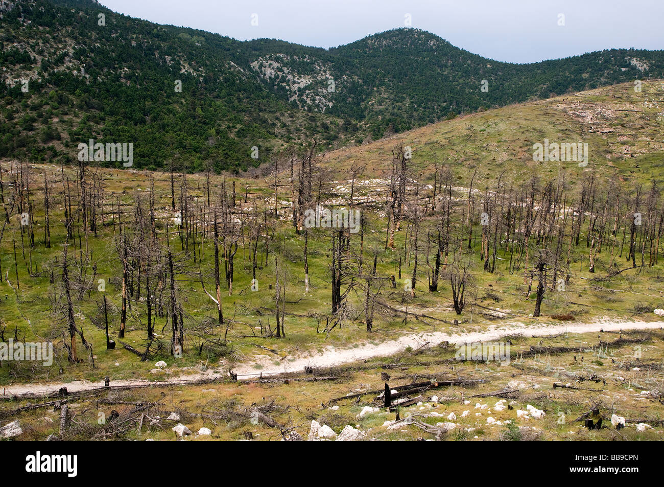 Eco catastrophe after human caused forest fire- mountain of Parnitha, Athens, Greece - Stock Image