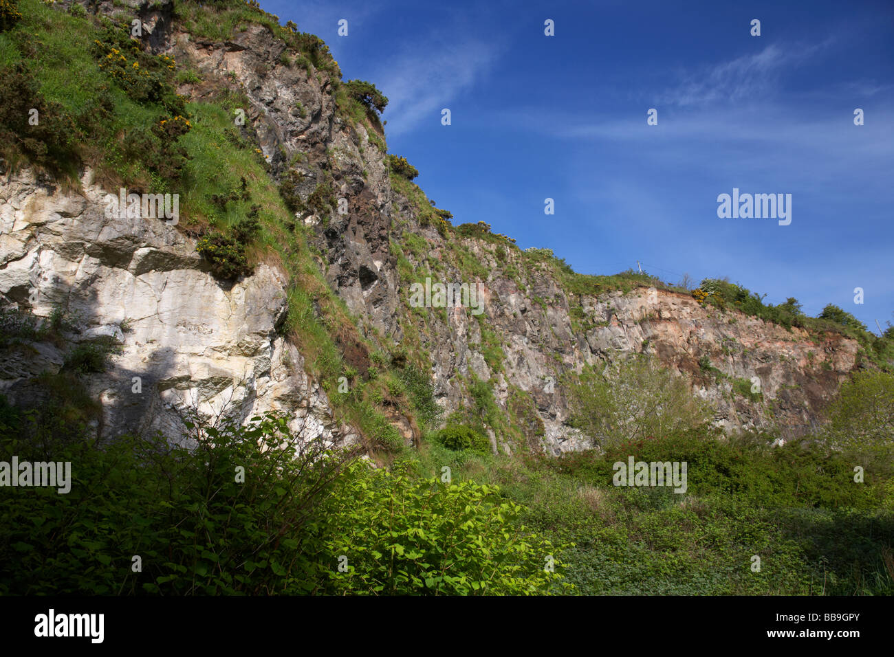 overgrown disused quarry at whitehead county antrim northern ireland uk whitehead takes its name from the nearby - Stock Image