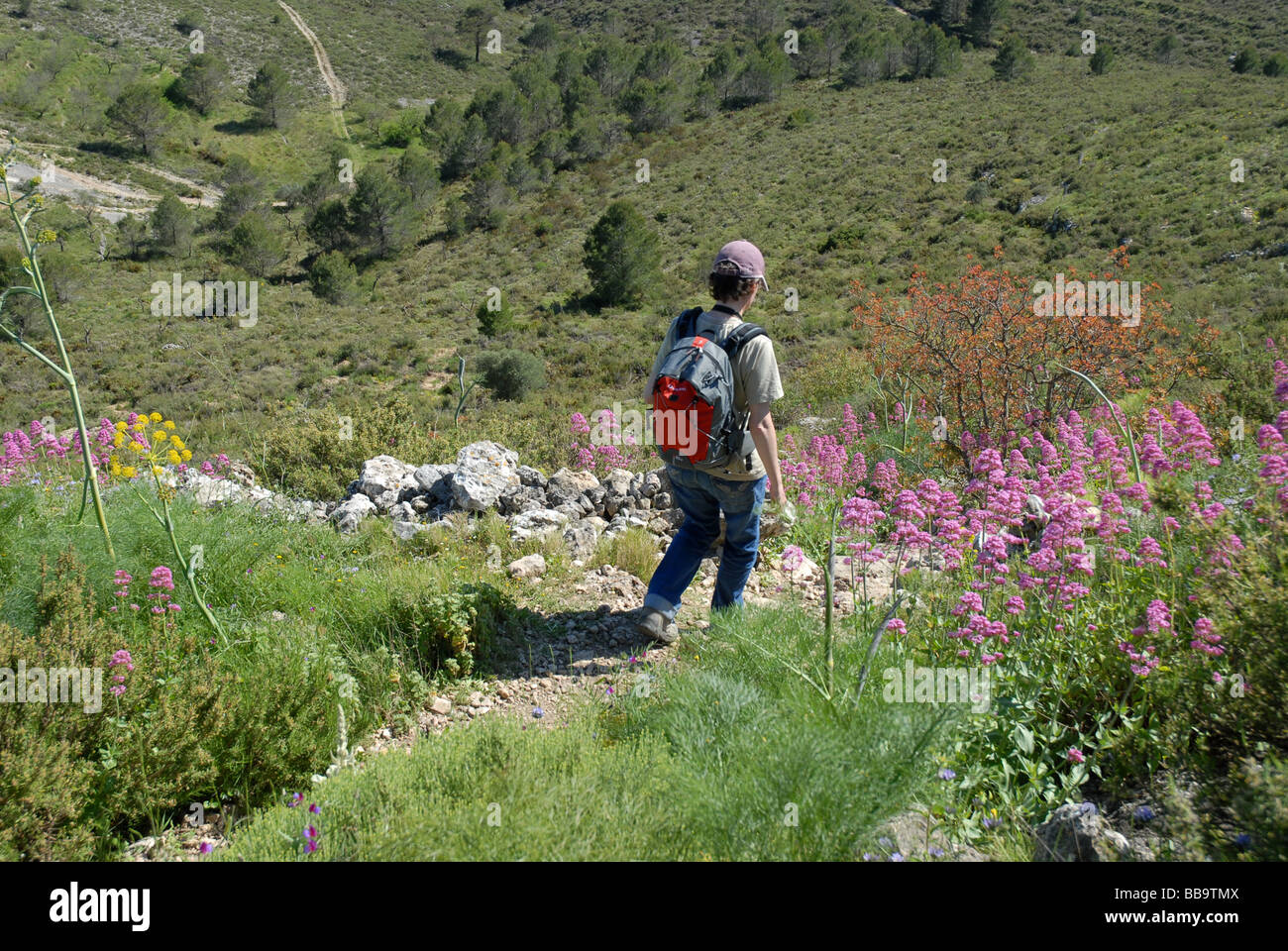 hiker on the Sierra de La Forada, near Alcala de La Jovada, Marina Alta, Alicante Province, Comunidad Valenciana, - Stock Image