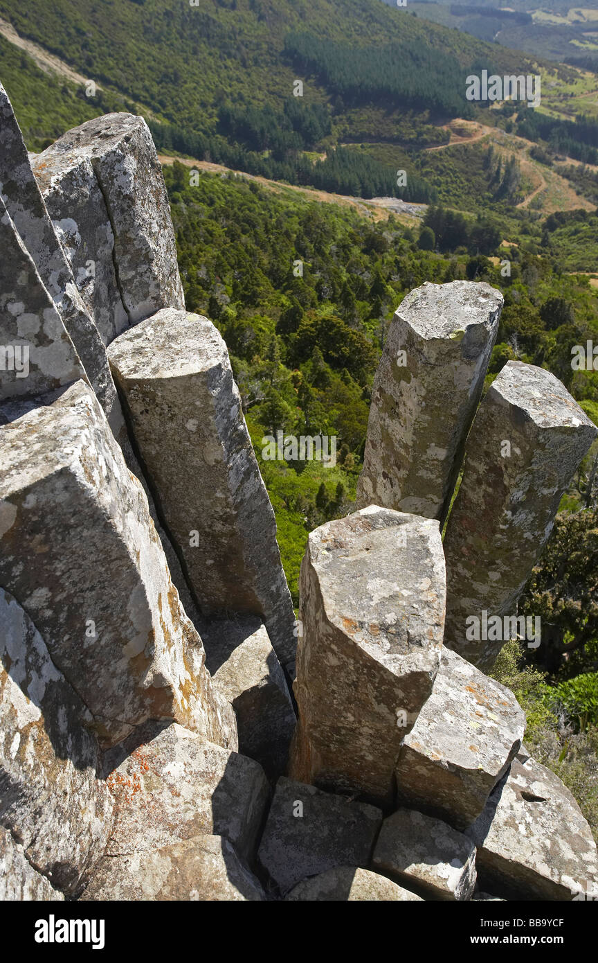 The Organ Pipes volcanic basalt rock columns Mt Cargill Dunedin Otago South Island New Zealand - Stock Image