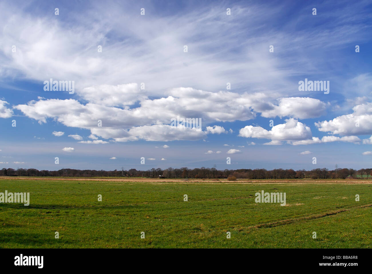 Landscape with white clouds on blue sky, green meadows in spring, nature reserve Oberalsterniederung lowland, Schleswig - Stock Image