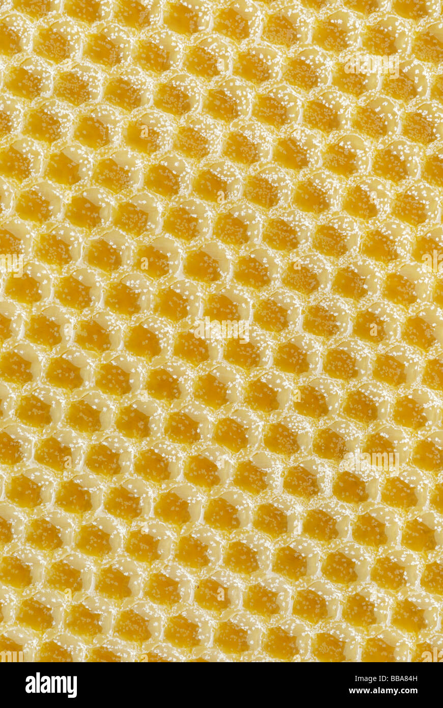 Honeycomb base cast from beeswax with wax crystals on the surface - Stock Image
