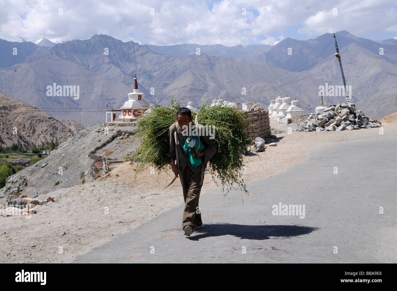 Farmer carrying fodder for winter storage to the village on Phiyang Monastery, Ladakh, India, Himalayas, Asia - Stock Image