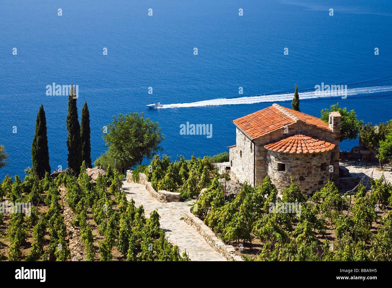 Small villa and vineyard above the coast near Colle d'Orano, Elba, Tuscany, Italy, Mediterranean, Europe - Stock Image