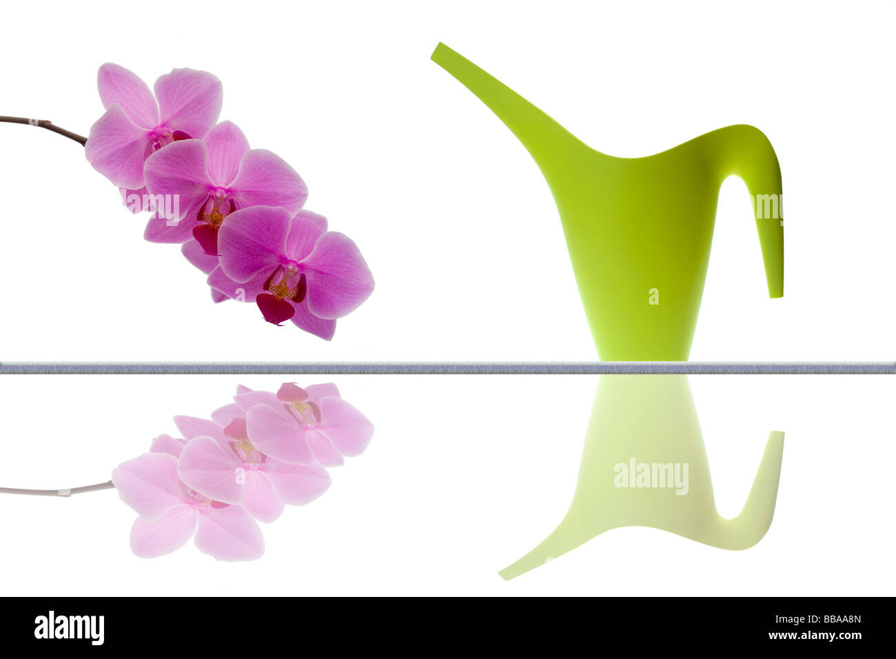 Modern watering can and orchid twig - Stock Image
