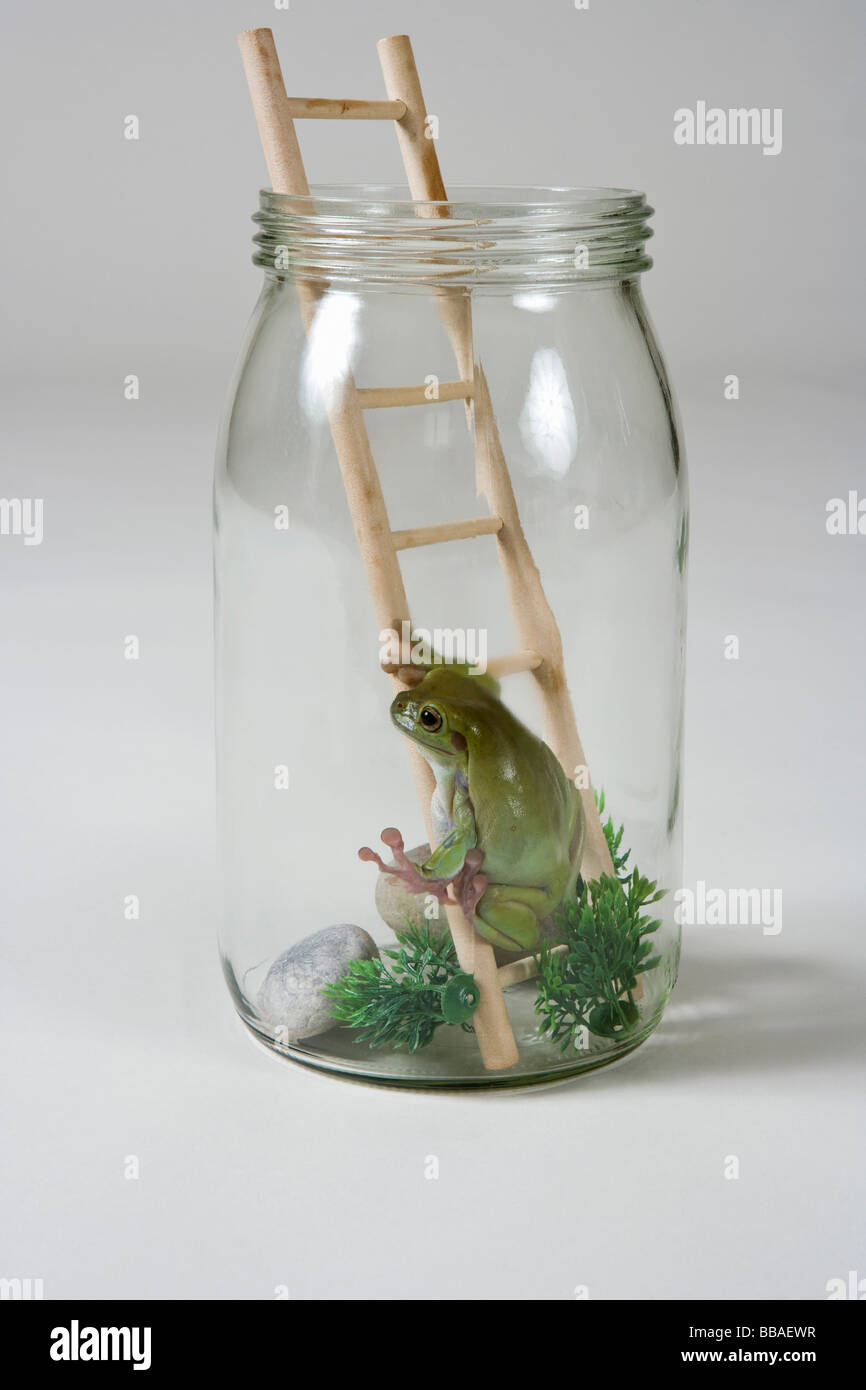 A frog in a jar on a ladder - Stock Image