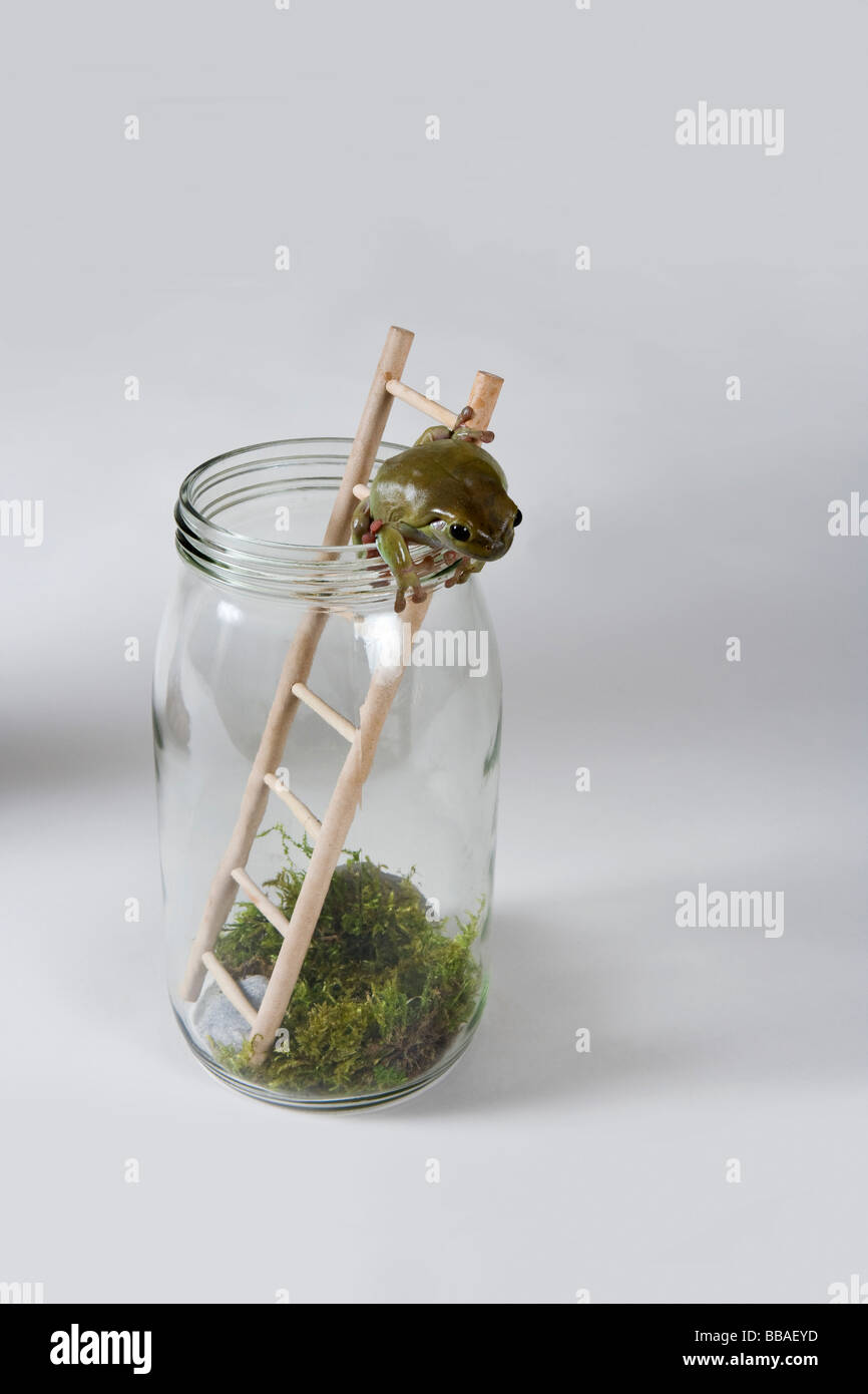A frog climbing out of a jar - Stock Image